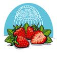 strawberries vector image