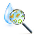 Magnifier bacteria and virus cells vector image