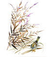 wild exotic bird on branch on white background vector image