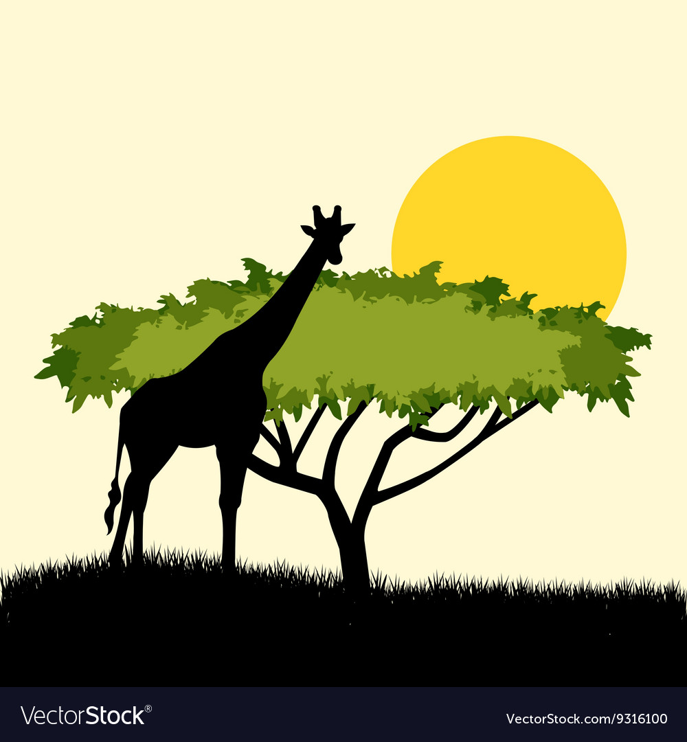 Acacia tree and giraffe silhouette concept design vector