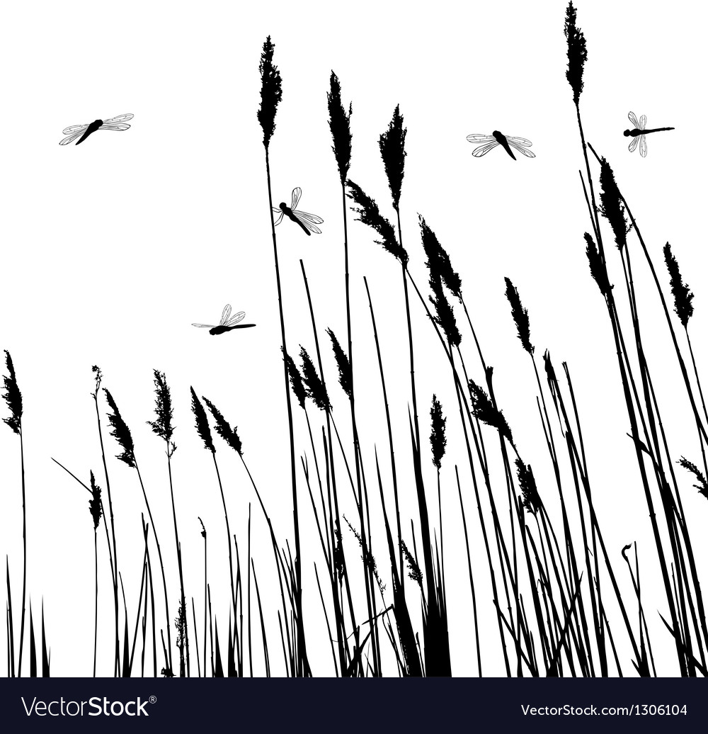 Reeds in the water and few dragonflies vector