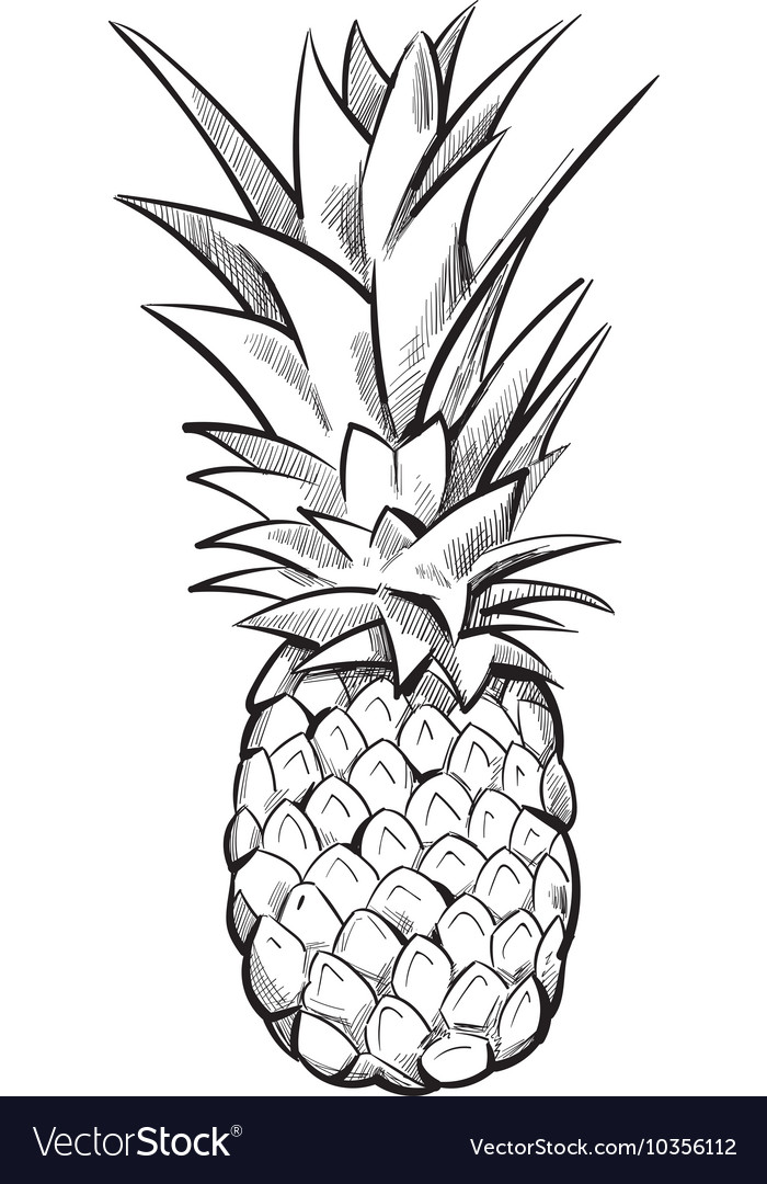 Hand drawn pineapple fruit vector