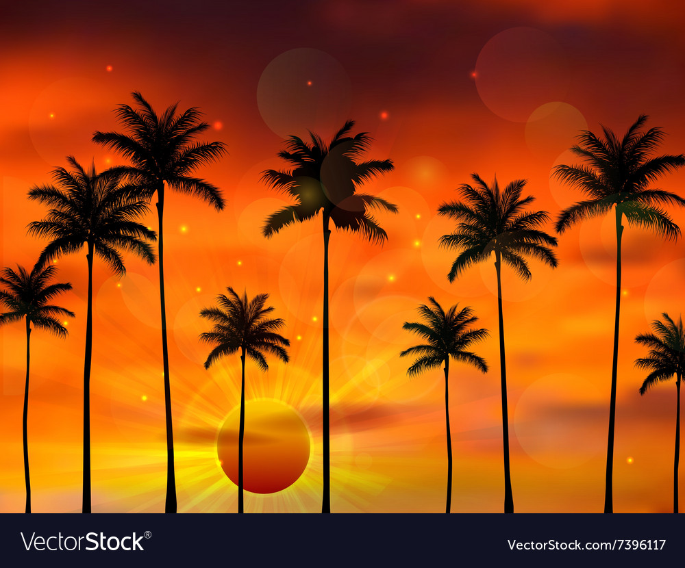Silhouette palm tree when of sunset vector