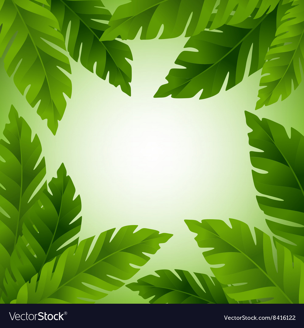 Banana leaves frame with copy space vector