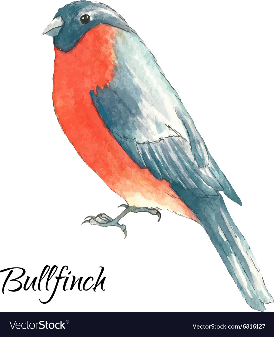 Bullfinch sits on the tree branch vector