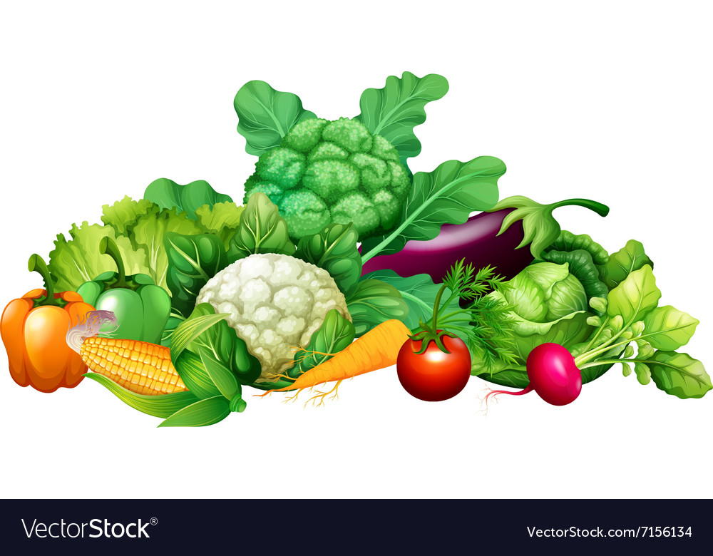 Different kind of vegetables vector