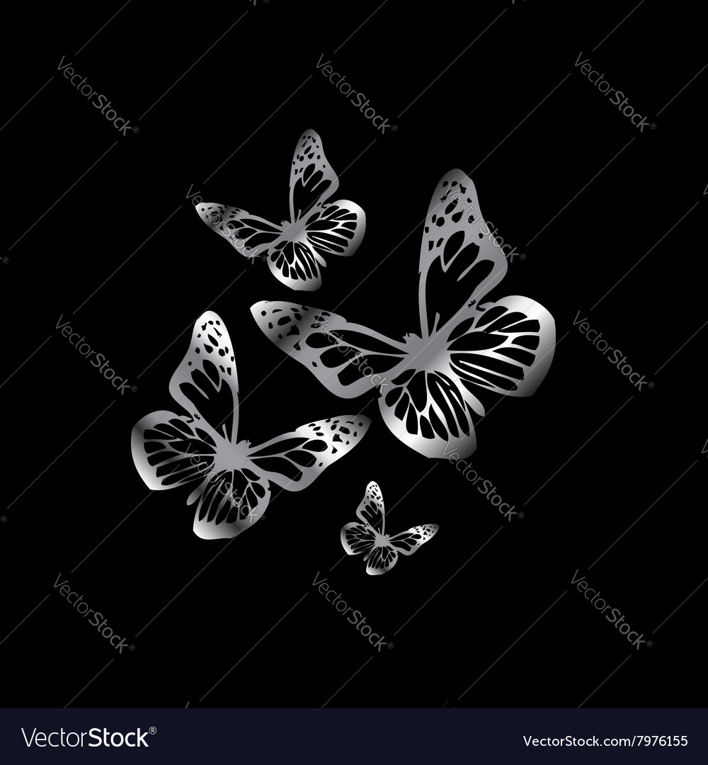 Silver colored butterflies flying on black vector