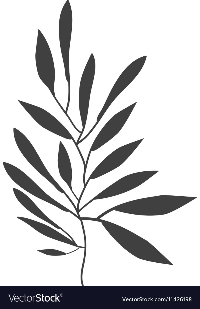 Gray scale olive with more leaves vector