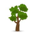 A stylized drawing of a green curly oak vector image