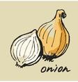 hand drawn onion vector image