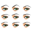 Nine different eyebrows set vector image