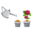 watering can with rose cute in pot vector image