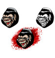 three heads of gorillas vector image