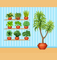 gardening set with many plants in pots vector image