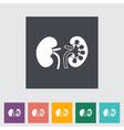 kidneys vector image