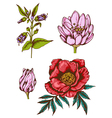 Set of hand drawn vintage flowers vector image vector image