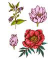 Set of hand drawn vintage flowers vector image