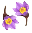 Blooming purple flower bud on white background vector image
