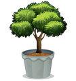 Potted plant vector image