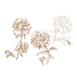 floral collection hand-drawn vector image