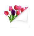 Spring flower background with cloven paper vector image