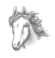Horse head sketch of arabian mare vector image vector image