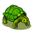galapagos turtle vector image vector image