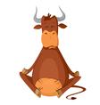 meditating cow vector image