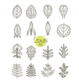 collection of varieties of leaf shape vector image