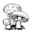 mushrooms engraving vector image