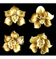 Set of Gold Orchids vector image