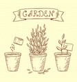 plants in pots vector image