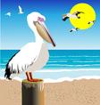 Pelican Watch vector image
