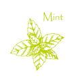 Hand drawn mint branch with leaves isolated on vector image