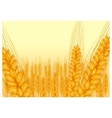 wheat harvest icon vector image