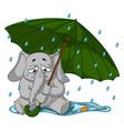 elephant crying under an umbrella autumn rain vector image