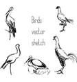 set of bird pencil sketches vector image
