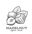 hand drawn hazelnut vector image