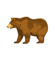 color of bear grizzly isolated vector image