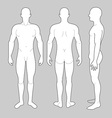 Male Body vector image