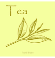 Green tea plant leaves Hand drawn herbal in sketch vector image