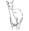 guanaco vector image