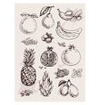 hand drawing fruits vector image
