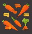set carrot sliced carrot vector image