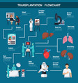Transplantation flowchart layout vector image
