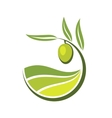 Fresh green olive with grades of olive oil vector image
