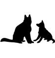 shepherd dogs vector image
