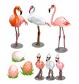group of large and small flamingos with eggs vector image