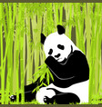 sweet panda in bright foliage vector image vector image