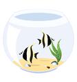 fish zanclus cornutus vector image